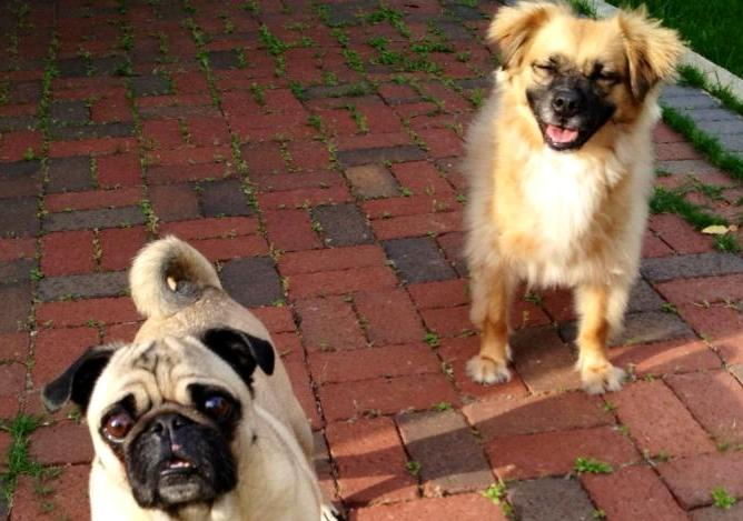 Curtis & Stella