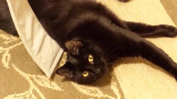 Pet Gal Debbie, The Cat's Meow