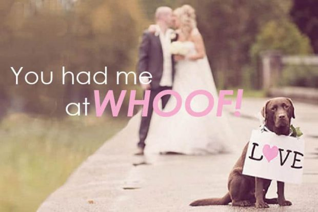 5 Fun Ways To Include Dogs In Your Wedding