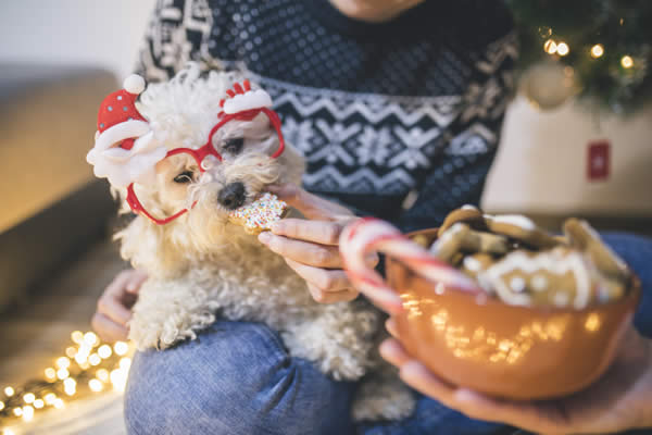 These Naughty Holiday Foods Can Be Hazardous For Dogs