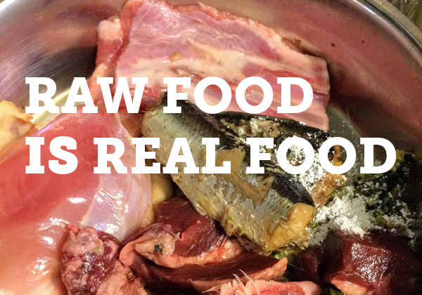 What you need to know before feeding a raw dog food diet