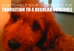 COVID-19: How To Help Your Quarantine Pup Transition To A Regular Schedule