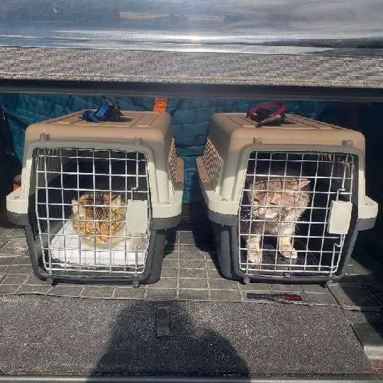 Pet Taxi in Waimea